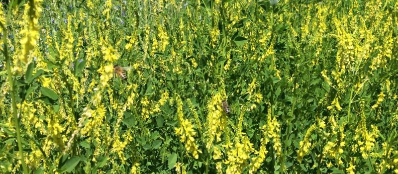 Cover crops benefit soil health on any scale