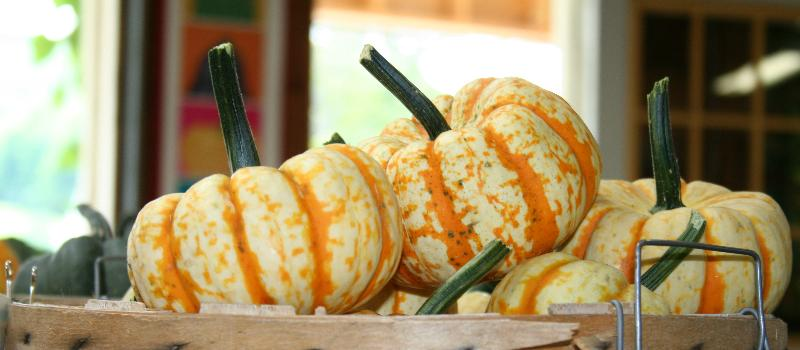 basket of pumpkins at the Berry Patch